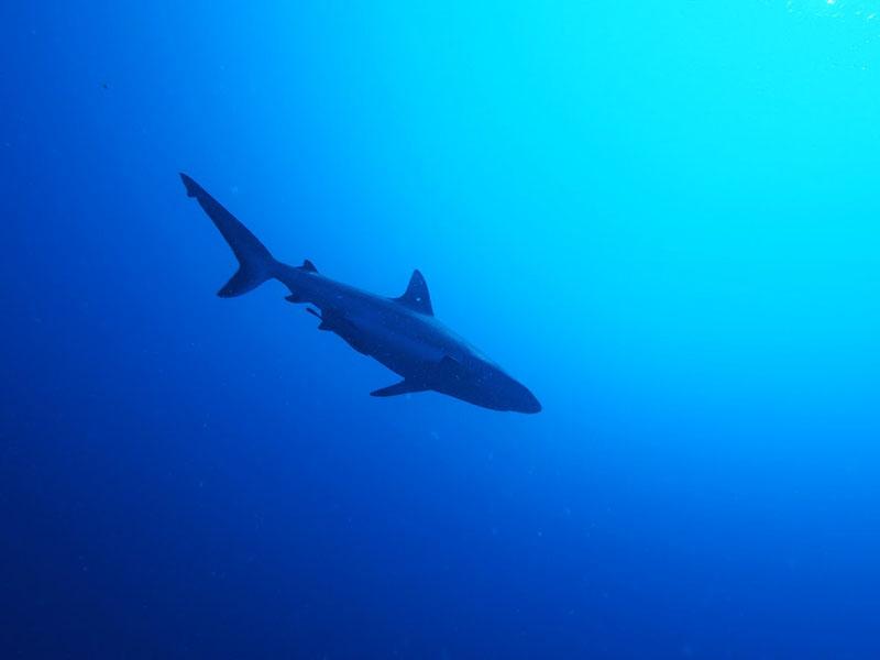 サメだらけ~