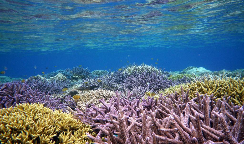 西表島サンゴ